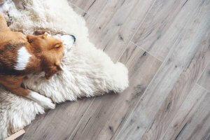 Should I Buy Formica Laminate Flooring?